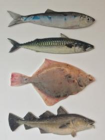 F¡SH! (2016) | vierluik: haring, makreel, schol & kabeljauw | in opdracht